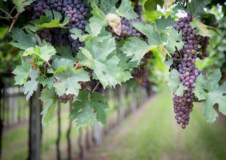 Amarone Wine Trail Tour