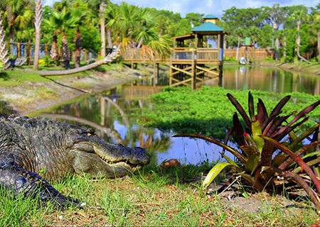 Wild Florida and Wildlife Park